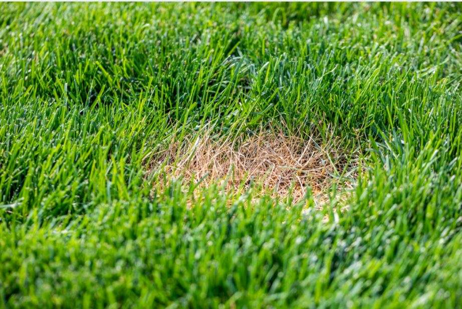 Dead Patches of Grass? Here's How to Make the Lawn Perfectly Green