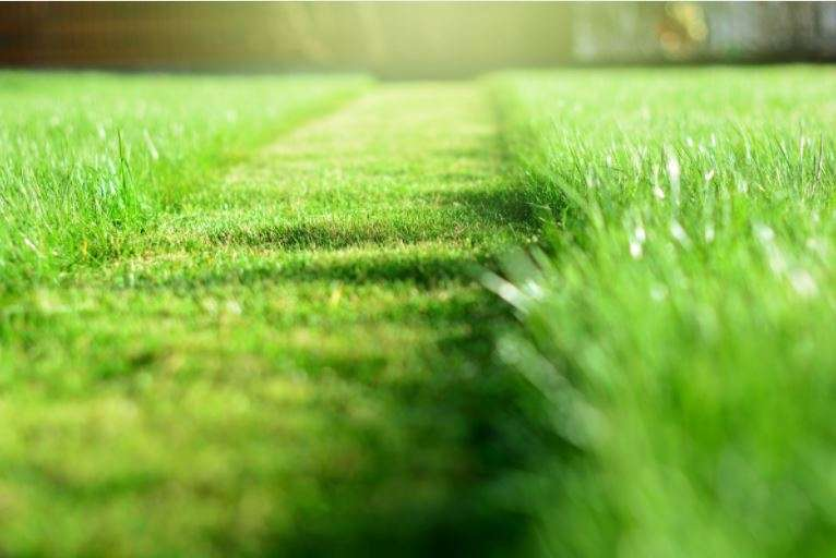 3 Signs It's Time to Grow Your Lawn Care Business (& How!)