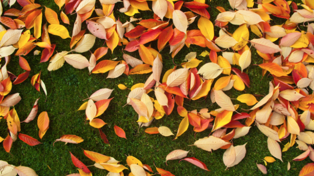 Autumn Lawn Maintenance for Humans :  6 Steps to a healthy lawn