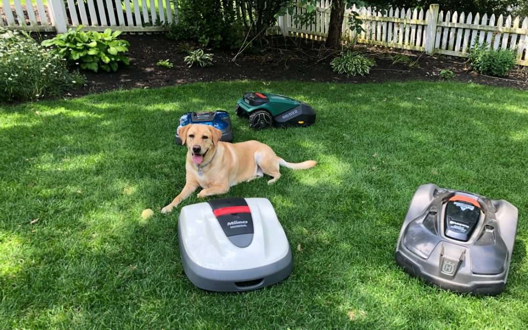 dogs and robotic lawn mowers