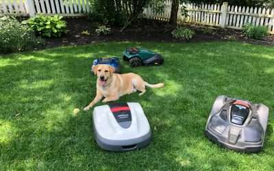 How do Dogs respond to robotic lawn mowers?